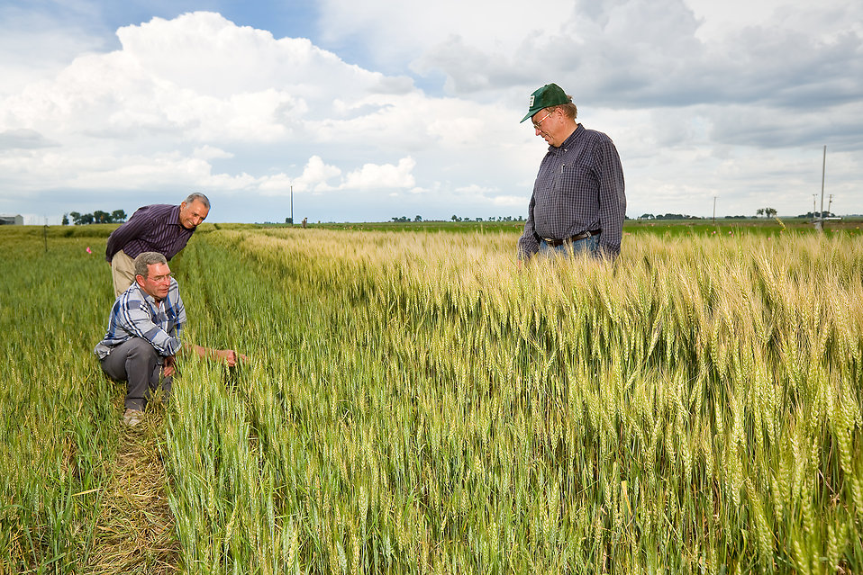 10050-agricultural-engineers-examining-a-wheat-field-pv